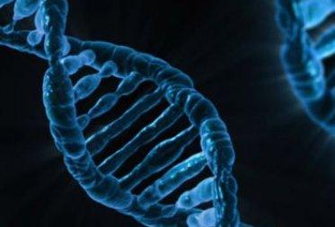Co kryje się w DNA?